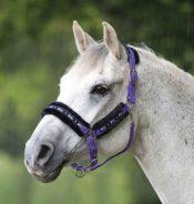 Bridleway Fleece Lined Headcollar - 91FxQKWWZZL. SL1500