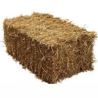 Handy Size Barley Straw Bale