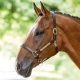 Bridleway Leather Headcollar with Name Plate V562 - v562 4