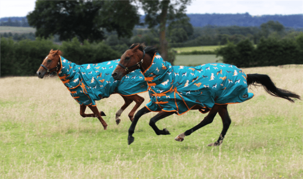 Horses with Gallop rugs