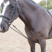 Soft Lunging Aid - soft lunging aid