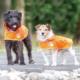 Visibility Dog Coat - v726 8 3