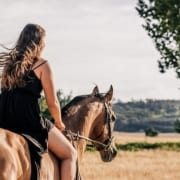 Horse on a hack