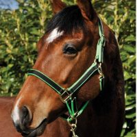 Bridleway Jester Two Tone Headcollar