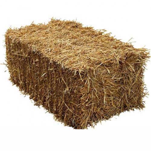 Barley Straw Bale