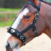 Strong Nylon Web Lunging Cavesson