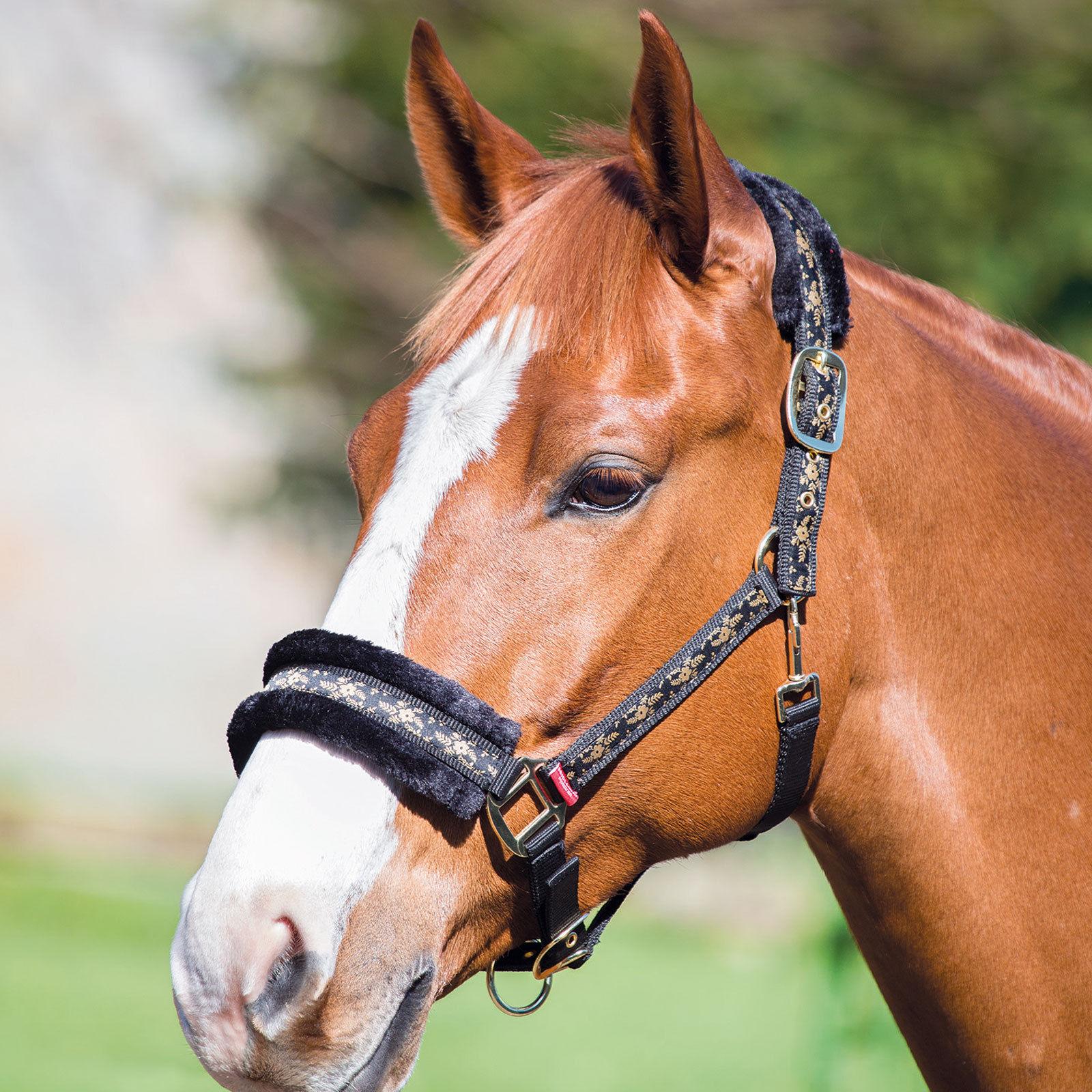 Bridleway Fleece Lined Headcollar Fleet Equestrian