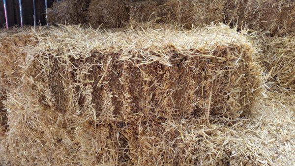 Handy Size Barley Straw Bale - 16kg, compressed to 90cm x 50cm x 40cm. Boxed. - Handy Size Barley Straw Bale 16kg compressed to 90cm x 50cm x 40cm Boxed 322759998123 3