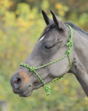 Shires Rope Control Headcollar - Shires Adjustable Rope Halter 322019701257