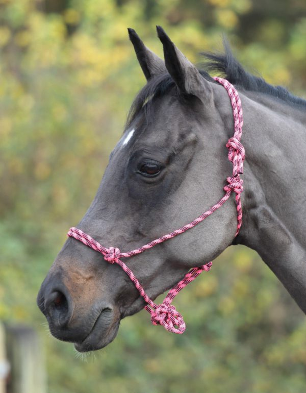 Shires Rope Control Headcollar - Shires Adjustable Rope Halter 322019701257 3