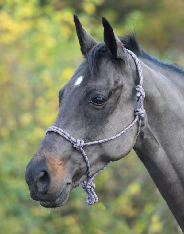 Shires Rope Control Headcollar - Shires Adjustable Rope Halter 322019701257 4