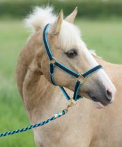 Bridleway Jester Headcollar and Leadrope Set - Bridleway Jester Headcollar and Leadrope Set FREE PP 322019855299